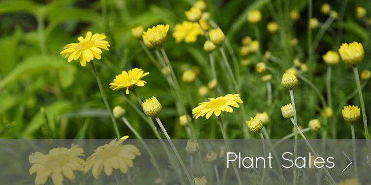 Middle Farm | Plant Sales
